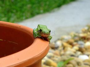 青蛙, 绿色的青蛙, 绿色, 动物, 自然, 两栖类, 野生动物, 跳, 蟾蜍