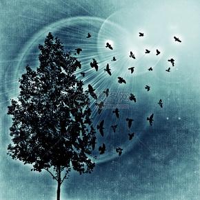 树, 鸟类, 鸟, 太阳, 背景