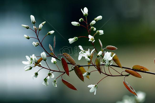 鲜花, 开花, 春, 春天的花朵, 自然, 植物, 夏天, 花的, 盛开, 设计