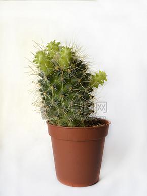 花盆里的植物