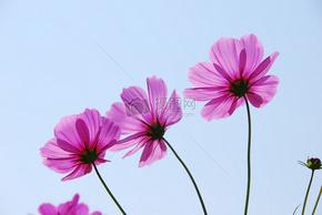 摇曳在风中的红色小花