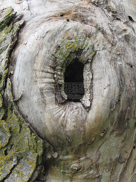 树根下的无底儿子洞高清图片避免费下载_jpg程式_34