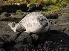 岩石上的海狮