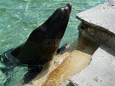 动物园的海狮
