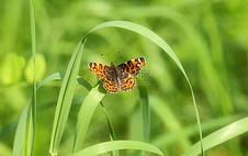 小草上的蝴蝶