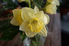 盛开的黄色花瓣