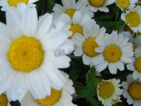 几朵白色的小花瓣