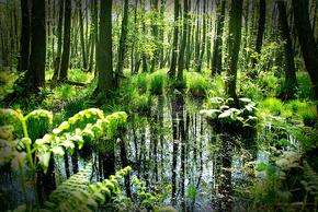 美丽的早晨在现场的森林