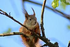 树可爱的小松鼠