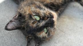 躺在石头上的猫咪