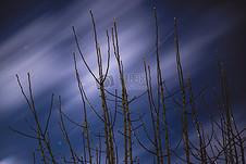 冷,天空,夜晚,黑暗,树,星星,月亮,风