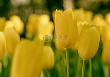 黄瓣花的特写照片